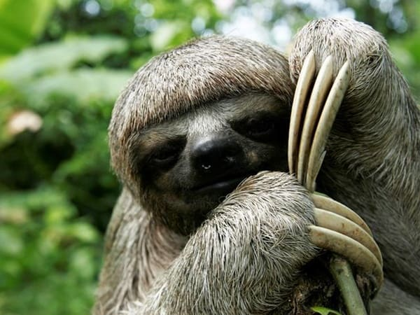 20 Interesting Facts about Sloths 1