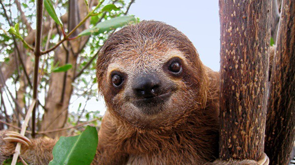 20 Interesting Facts about Sloths 2