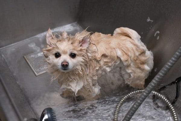 40 Easy Dog Wash Area Ideas 1