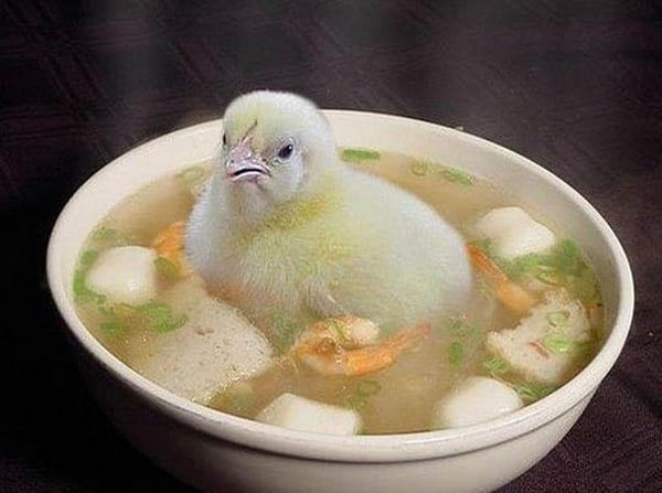 40 Funny and Cute Ideas Of Chicken Pictures 40