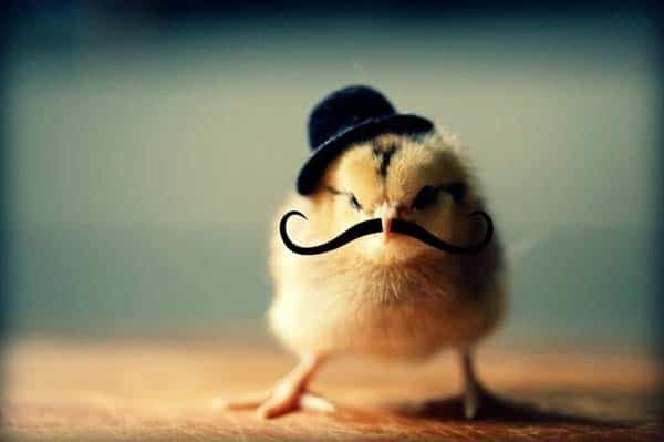 Cute Chicken Quotes: 40 Cute And Funny Chicken Pictures That Will Make Your Day