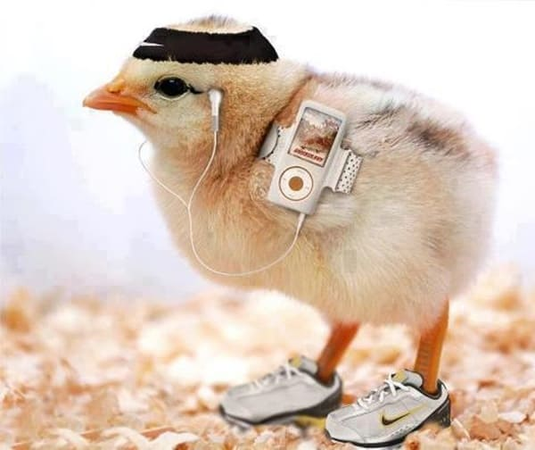 40 Funny and Cute Ideas Of Chicken Pictures 9
