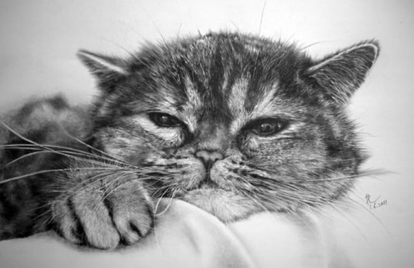 40 Great Examples of Cute and Majestic Cat Drawings 10