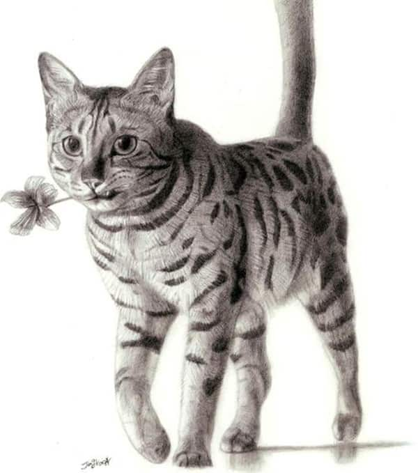 40 Great Examples of Cute and Majestic Cat Drawings 11