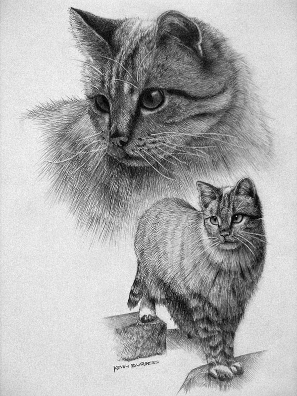 40 Great Examples of Cute and Majestic Cat Drawings 15