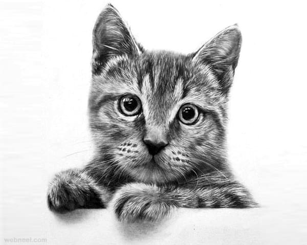 40 Great Examples of Cute and Majestic Cat Drawings - Tail ...