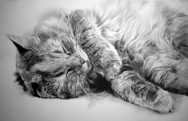 40 Great Examples of Cute and Majestic Cat Drawings 21