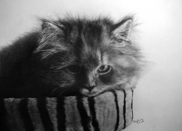 40 Great Examples of Cute and Majestic Cat Drawings 26