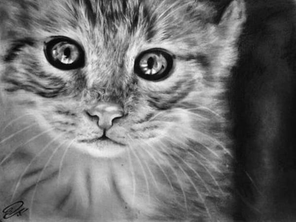 40 Great Examples of Cute and Majestic Cat Drawings 28