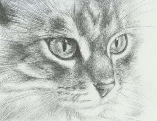 40 Great Examples of Cute and Majestic Cat Drawings 3