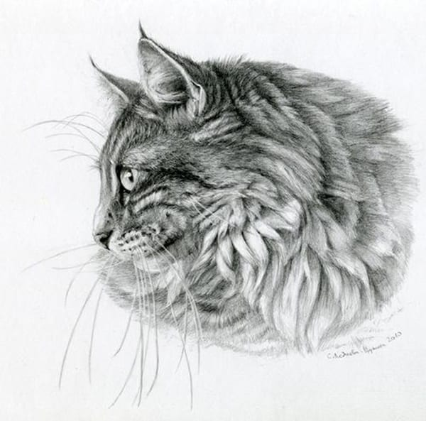 40 Great Examples of Cute and Majestic Cat Drawings 31