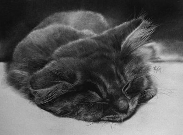40 Great Examples of Cute and Majestic Cat Drawings 32