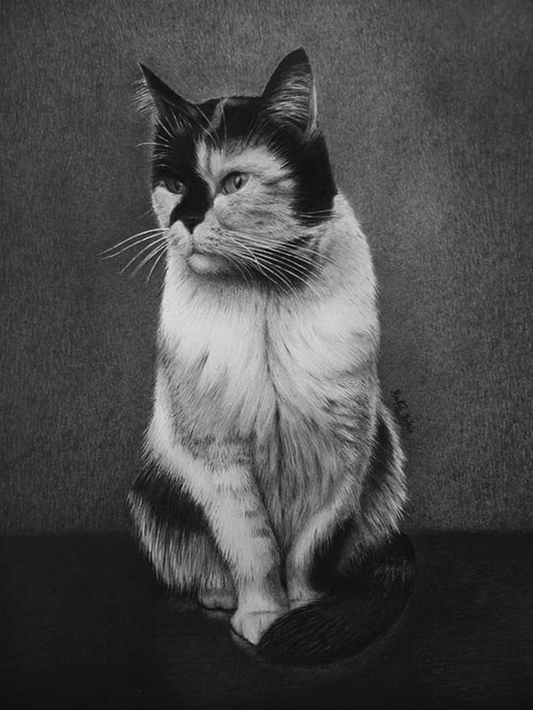 40 Great Examples of Cute and Majestic Cat Drawings 33