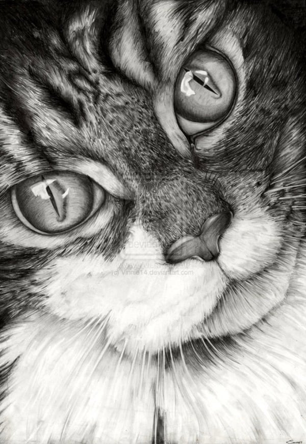 40 Great Examples of Cute and Majestic Cat Drawings 38