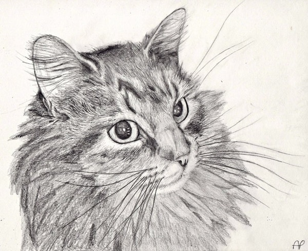 40 Great Examples of Cute and Majestic Cat Drawings 4
