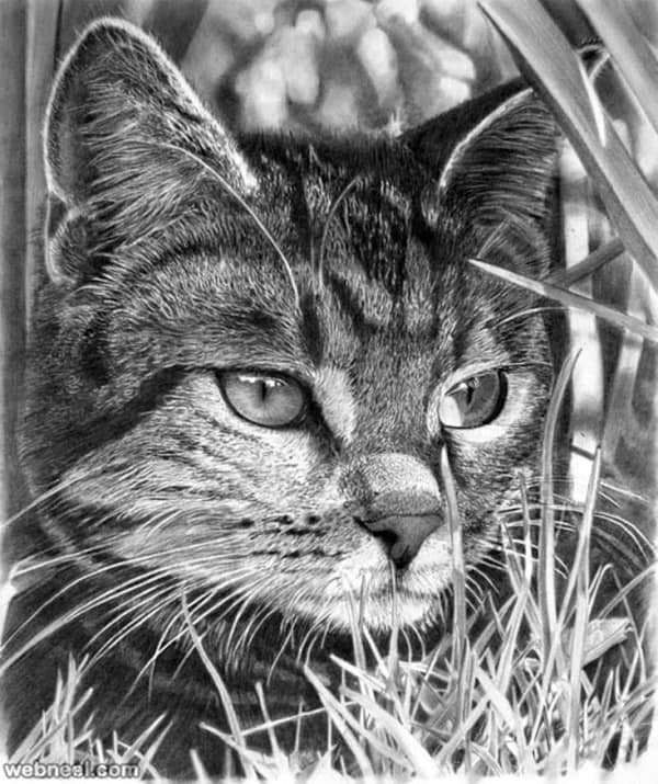 40 Great Examples of Cute and Majestic Cat Drawings 40