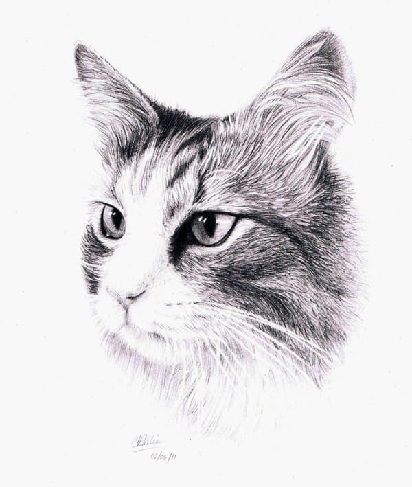 40 Great Examples of Cute and Majestic Cat Drawings 7