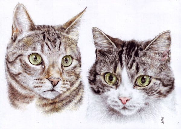 40 Great Examples of Cute and Majestic Cat Drawings 8