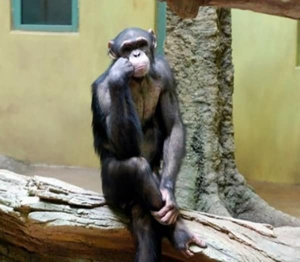 40 Pictures Of Animals in Deep Thought 12