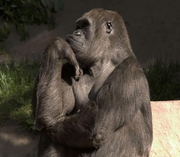 40 Pictures Of Animals in Deep Thought 17