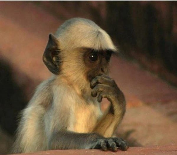 40 Pictures Of Animals in Deep Thought 19