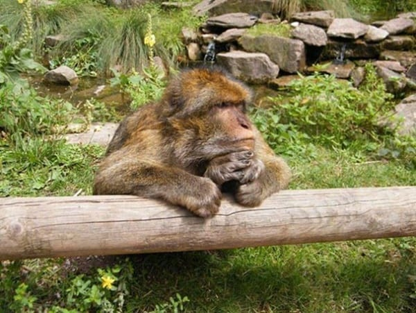 40 Pictures Of Animals in Deep Thought 21
