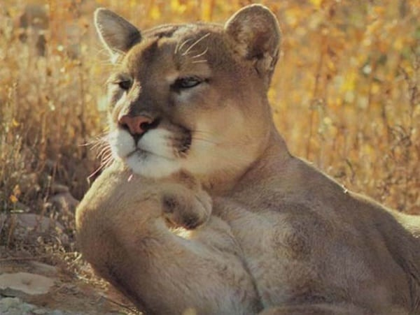 40 Pictures Of Animals in Deep Thought 22
