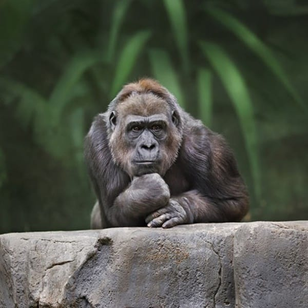 40 Pictures Of Animals in Deep Thought 23