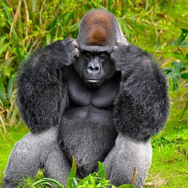 40 Pictures Of Animals in Deep Thought 24