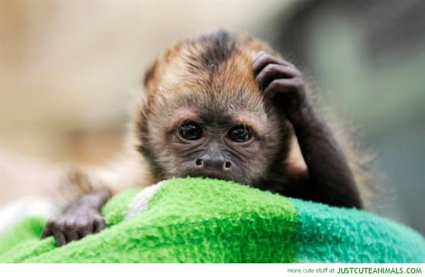 40 Pictures Of Animals in Deep Thought 38