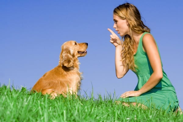 Obedience Training Commands  Brain Training 4 Dogs Under 600