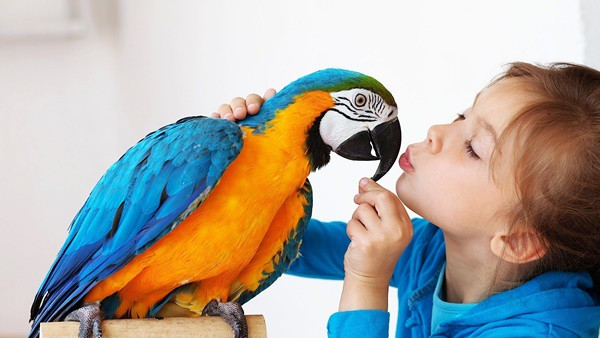 8 Important Tips to Take Care of Pet Birds this Winter - Tail and Fur