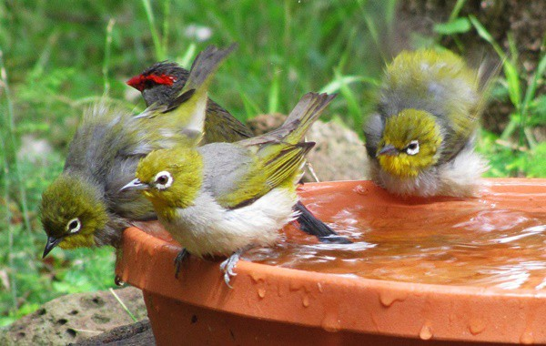 Tips to take Care of Birds this Winter 6