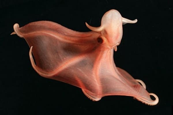 10-common-octopus-species-list-with-pictures-2