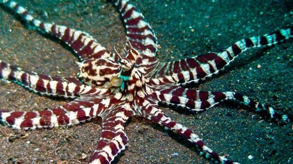 10-common-octopus-species-list-with-pictures-3