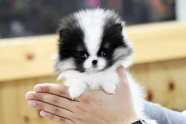 10 Breeds Of Dogs That Looks Like Bears Or Teddy Bears