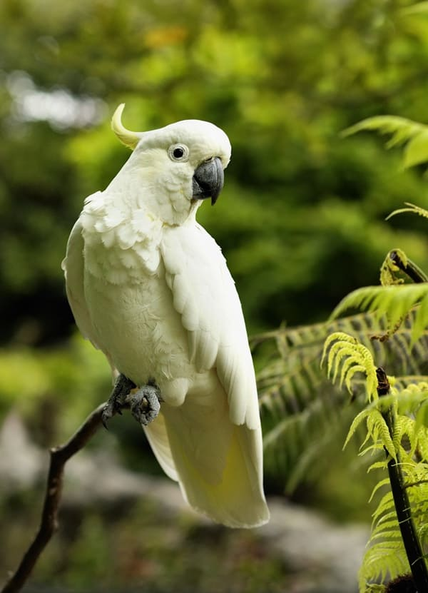 10-most-beautiful-parrot-species-in-the-world-11