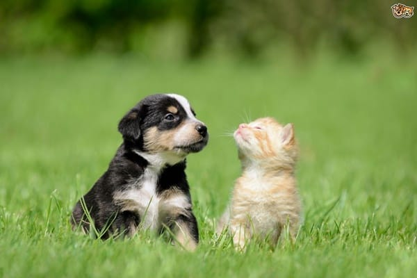 20-interesting-differences-between-cats-and-dogs-10