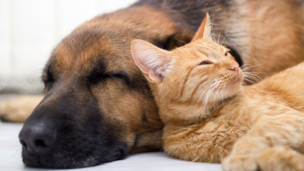 20-interesting-differences-between-cats-and-dogs-5