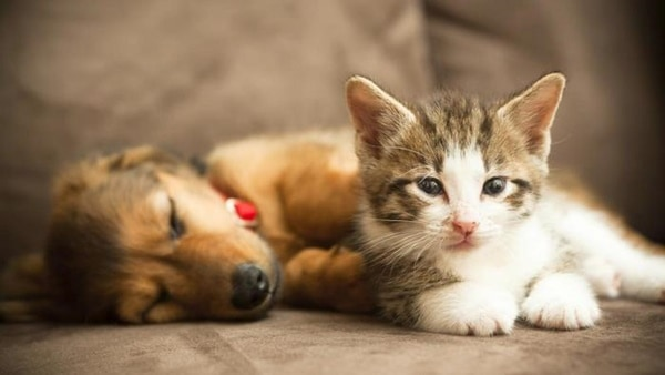 20-interesting-differences-between-cats-and-dogs-8