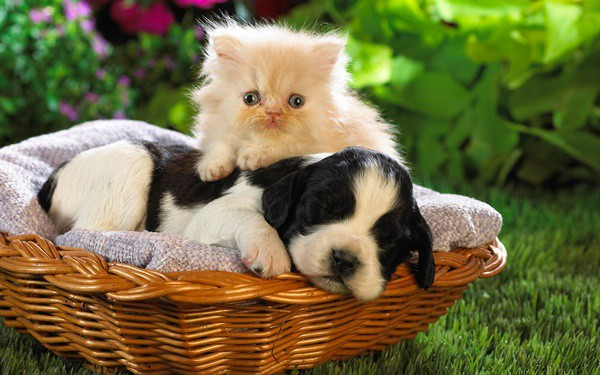 20-interesting-differences-between-cats-and-dogs-9