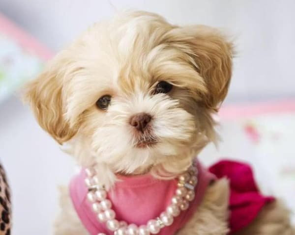 Dogs For Sale In Louisiana Akc