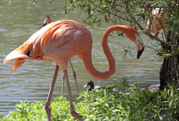 40-beautiful-pictures-of-pink-flamingo-birds-10