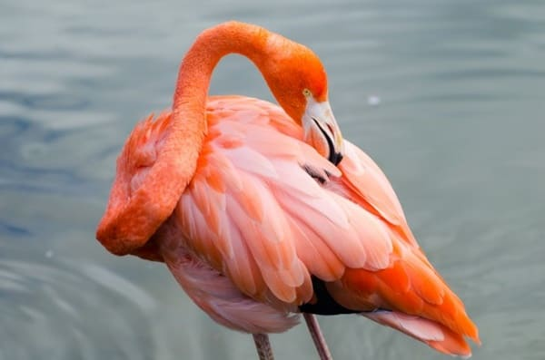 40-beautiful-pictures-of-pink-flamingo-birds-12