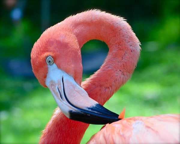 40-beautiful-pictures-of-pink-flamingo-birds-13