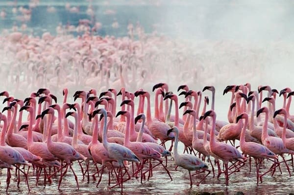 40-beautiful-pictures-of-pink-flamingo-birds-15