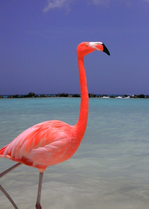 40-beautiful-pictures-of-pink-flamingo-birds-16