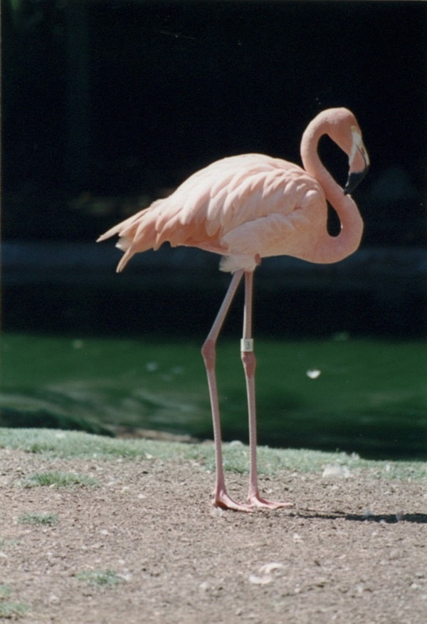 40-beautiful-pictures-of-pink-flamingo-birds-17