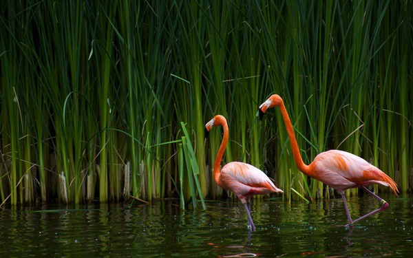 40-beautiful-pictures-of-pink-flamingo-birds-19