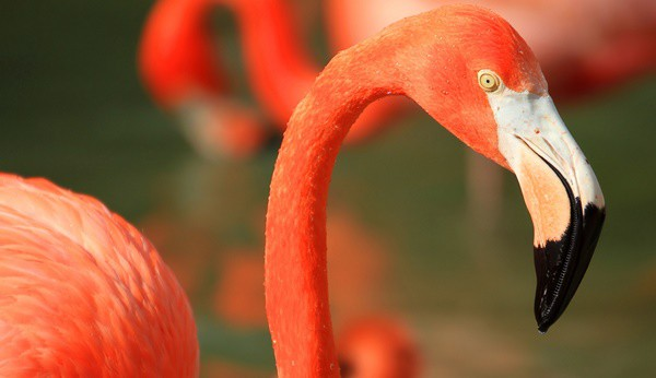 40-beautiful-pictures-of-pink-flamingo-birds-20